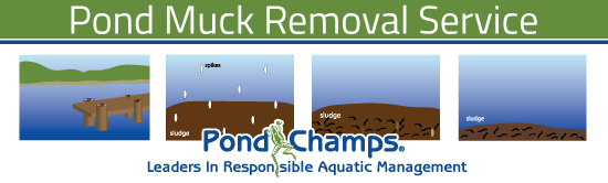 Pond-Muck-Infographic
